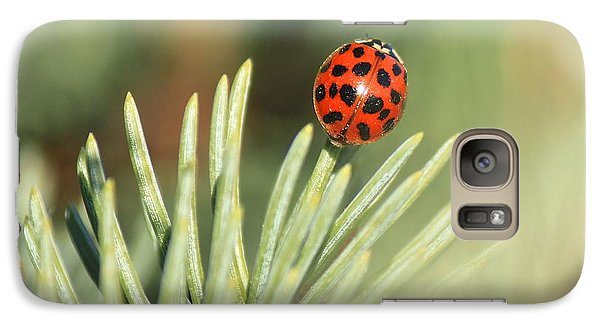 Galaxy Case featuring the photograph Lady Beetle On A Needle by Penny Meyers