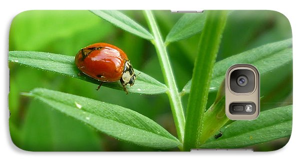 Galaxy Case featuring the photograph Ladybug And Bud by Renee Trenholm