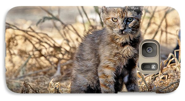 Galaxy Case featuring the photograph Lone Feral Kitten by Chriss Pagani