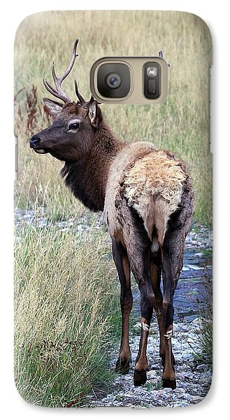 Galaxy Case featuring the photograph Looking Back Bull by Steve McKinzie