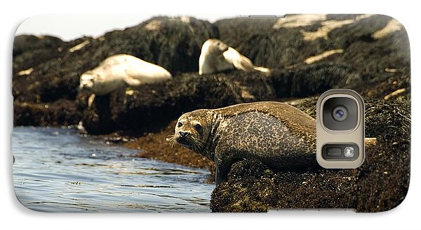 Galaxy Case featuring the photograph Lounging Seals by Rick Frost