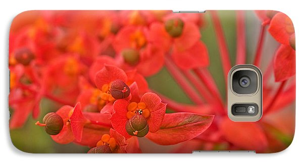 Galaxy Case featuring the photograph Macro Euphorbia Fireglow Plant by Valerie Garner