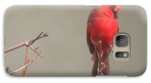 Galaxy Case featuring the photograph Male Cardinal On A Branch by Laurel Talabere
