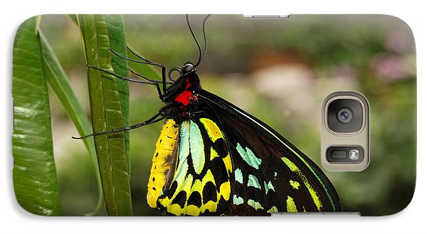 Galaxy Case featuring the photograph Male New Guinea Birdwing Butterfly by Eva Kaufman