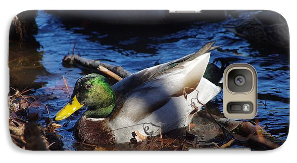 Galaxy Case featuring the photograph Mallard by Tannis  Baldwin