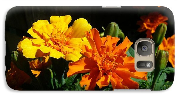 Galaxy Case featuring the photograph Marigold Morning Glory by Jim Sauchyn