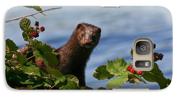 Galaxy Case featuring the photograph Mink In Blackberries. by Mitch Shindelbower