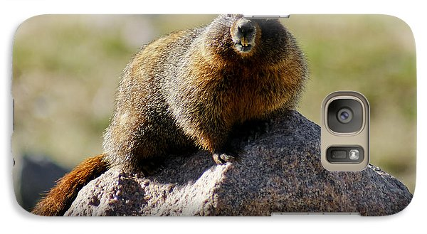 Galaxy Case featuring the photograph Morning Marmot by Colleen Coccia