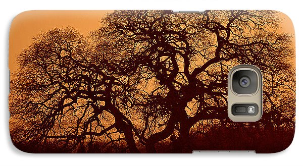 Galaxy Case featuring the photograph Oak Tree At Sunset by Rima Biswas