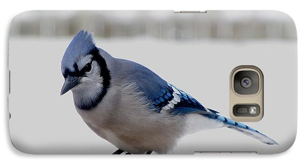 Galaxy Case featuring the photograph Blue Jay by Maciek Froncisz