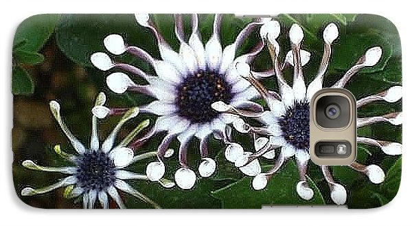 Galaxy Case featuring the photograph Osteospermum by Katy Mei