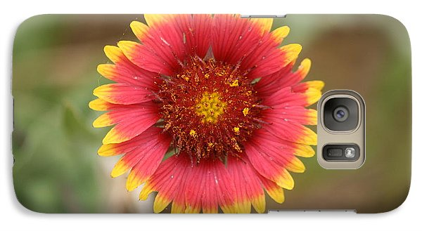Galaxy Case featuring the photograph Painted Blanket Flower by Donna  Smith