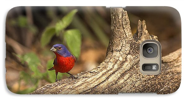 Galaxy Case featuring the photograph Painted Bunting On Log by Anne Rodkin