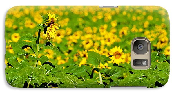 Galaxy Case featuring the photograph Peeking Above  Sea Of Yellow by Colleen Coccia