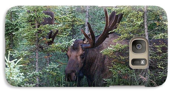 Galaxy Case featuring the photograph Peeking Through The Spruce by Doug Lloyd