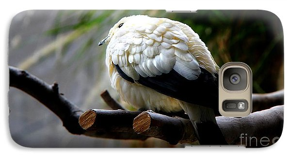 Galaxy Case featuring the photograph Pied Imperial Pigeon by Davandra Cribbie