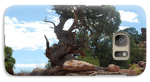 Galaxy Case featuring the photograph Pine Tree By The Canyon by Dany Lison