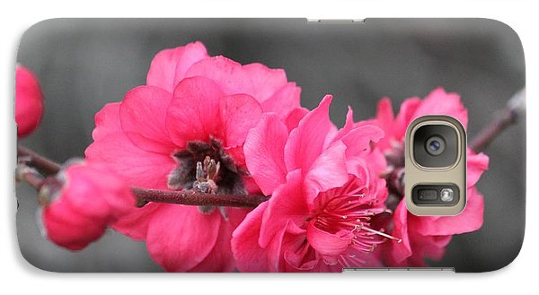 Galaxy Case featuring the photograph Pink Blossoms  by Amy Gallagher