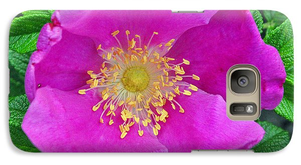 Galaxy Case featuring the photograph Pink Portulaca by Tikvah's Hope
