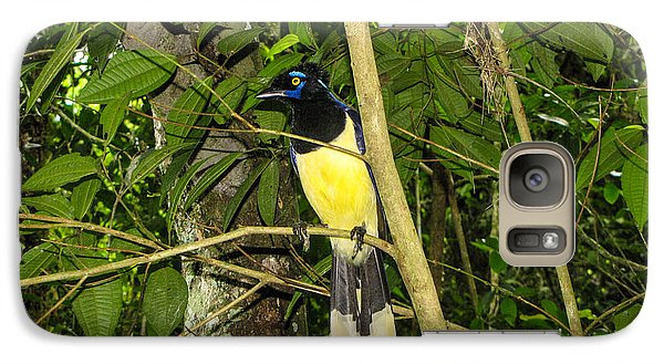 Galaxy Case featuring the photograph Plush-crested Jay by David Gleeson
