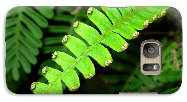 Galaxy Case featuring the photograph Polypody by Judi Bagwell
