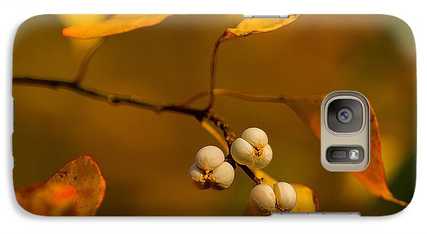 Galaxy Case featuring the photograph Popcorn Tree by Dan Wells