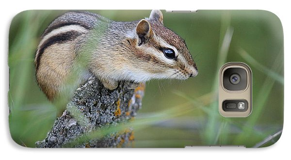 Galaxy Case featuring the photograph Portrait Of A Chipmunk by Penny Meyers