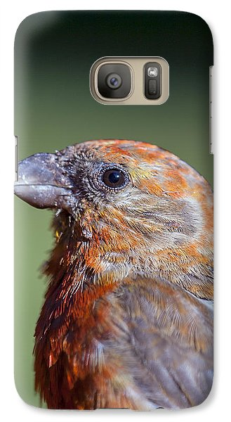 Red Crossbill Galaxy Case by Derek Holzapfel