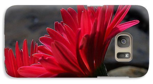 Galaxy Case featuring the photograph Red English Daisy by Joe Schofield