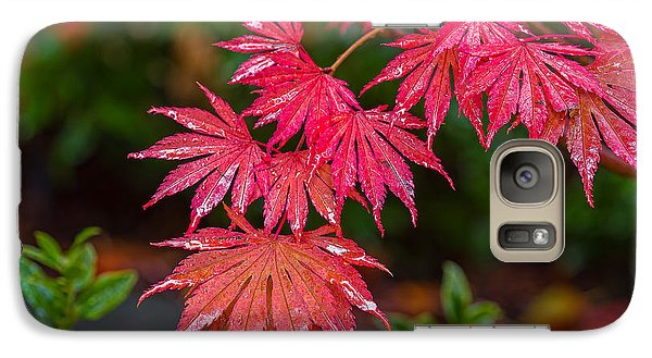 Galaxy Case featuring the photograph Red Maple Season by Ken Stanback