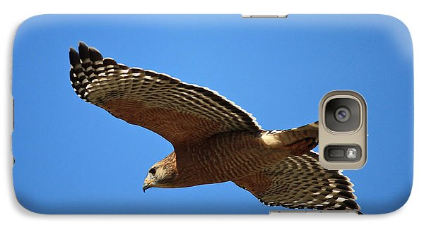 Red Shouldered Hawk In Flight Galaxy S7 Case by Carol Groenen