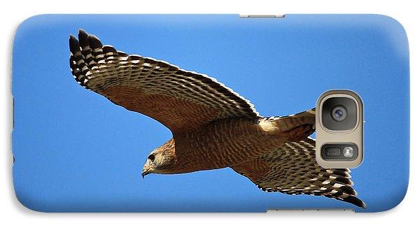 Red Shouldered Hawk In Flight Galaxy S7 Case by Carol Groenen