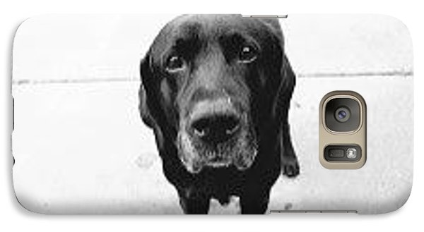 Galaxy Case featuring the photograph Sad Lab by Lennie Green