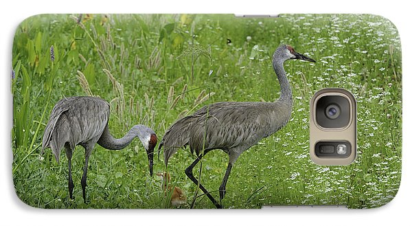 Galaxy Case featuring the photograph Sandhill Cranes And Chick by Bradford Martin