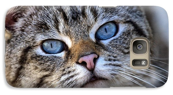Galaxy Case featuring the photograph Siamese Feral Cat by Chriss Pagani