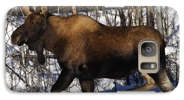 Galaxy Case featuring the photograph Snow Moose by Doug Lloyd