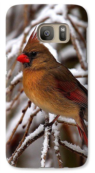 Galaxy Case featuring the photograph Snowbirds--cardinal Dsb025 by Gerry Gantt