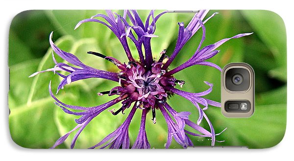 Galaxy Case featuring the photograph Spider Flower by Nick Kloepping