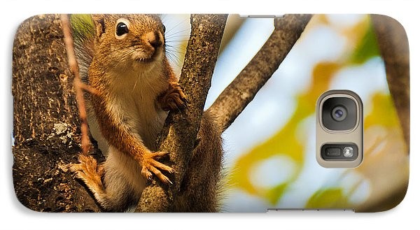 Galaxy Case featuring the photograph Squirrel On High by Cheryl Baxter