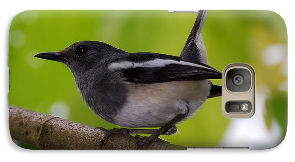 Galaxy Case featuring the photograph Study Of A Magpie-robin by Fotosas Photography