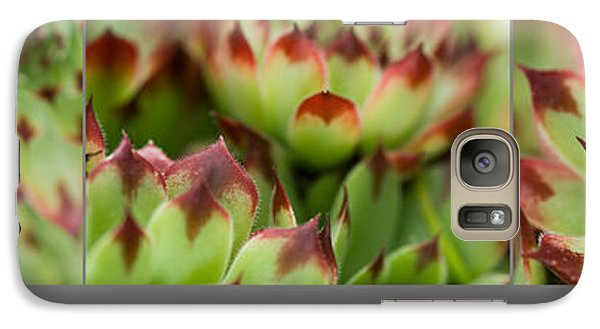 Galaxy Case featuring the photograph Succulent by Trevor Chriss