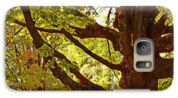 Galaxy Case featuring the photograph Sugarbush by William Fields