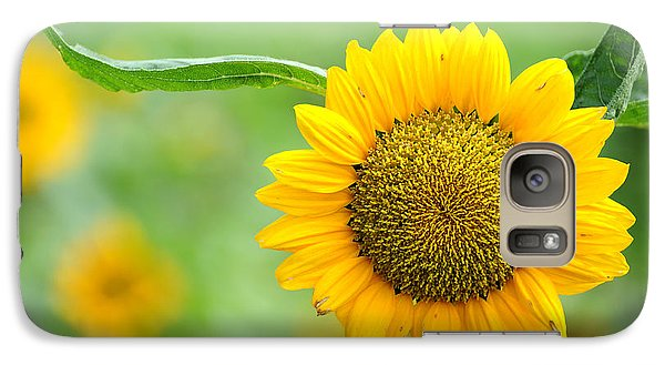 Galaxy Case featuring the photograph Sunflower by Yew Kwang