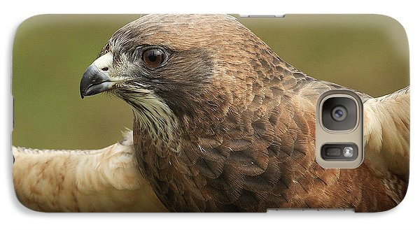 Galaxy Case featuring the photograph Swainson's Hawk by Doug Herr