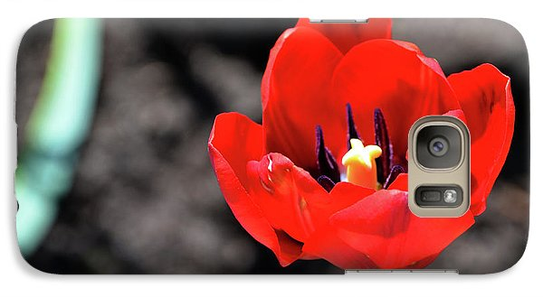 Galaxy Case featuring the photograph Tulips Blooming by Pravine Chester