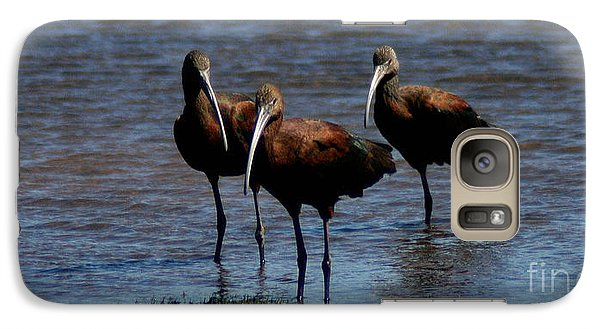 Galaxy Case featuring the photograph Waiding Ibis by Mitch Shindelbower