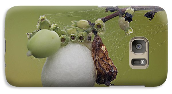 Galaxy Case featuring the photograph Webbed Berry by Eunice Gibb