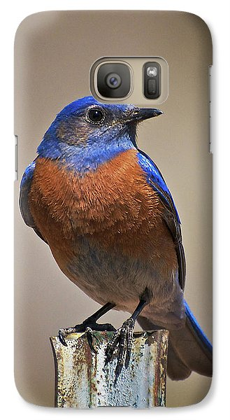 Galaxy Case featuring the photograph Western Bluebird by Britt Runyon
