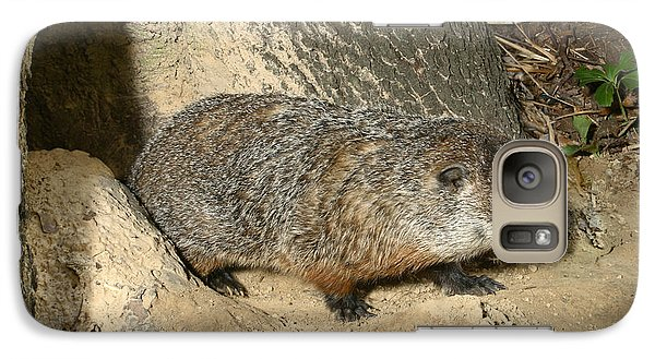 Woodchuck Galaxy S7 Case by Ted Kinsman