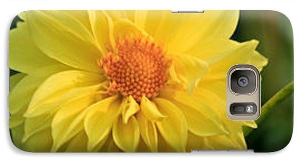 Galaxy Case featuring the photograph Yellow Dahlia by Ann Murphy